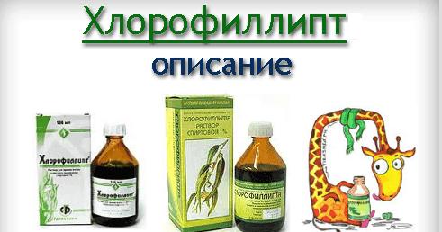 хлорофиллипт ангина