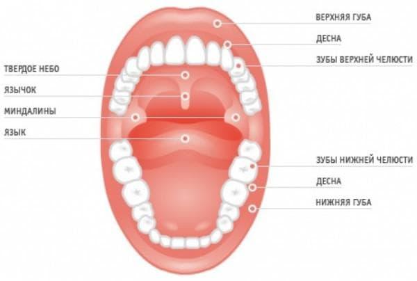 Воспалительный процесс в горле и ротовой полости