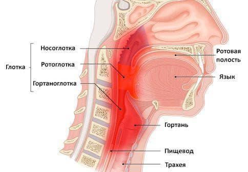 хроническое воспаление носоглотки