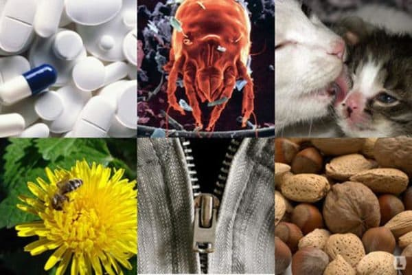 аллергический ринит причины