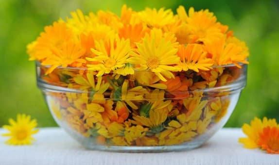 цветок календулы при лечении ринита в домашних условиях