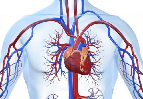 заболевания сердечно - сосудистой системы
