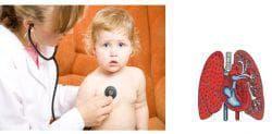 органы дыхания у ребёнка
