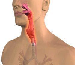 ткани горла